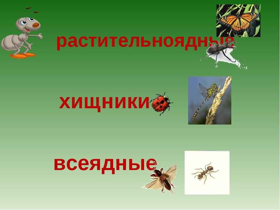растительноядные хищники всеядные
