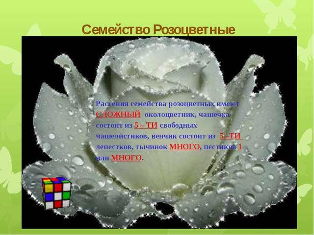 Семейство Розоцветные Растения семейства розоцветных имеют СЛОЖНЫЙ околоцветн...
