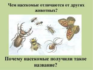 Чем насекомые отличаются от других животных? Почему насекомые получили такое