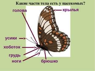 усики крылья голова хоботок грудь брюшко ноги Какие части тела есть у насеком