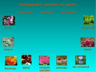 Распределите растения по группа астра папоротник капуста лилия виола эхиноцея