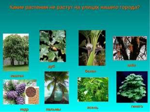 гинкго кедр пальмы ясень клён банан каштан дуб Какие растения не растут на ул