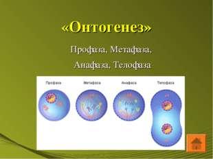 «Онтогенез» Профаза, Метафаза, Анафаза, Телофаза