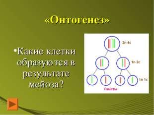 «Онтогенез» Какие клетки образуются в результате мейоза?