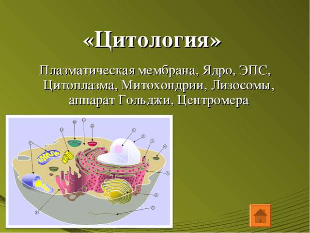 «Цитология» Плазматическая мембрана, Ядро, ЭПС, Цитоплазма, Митохондрии, Лизо...