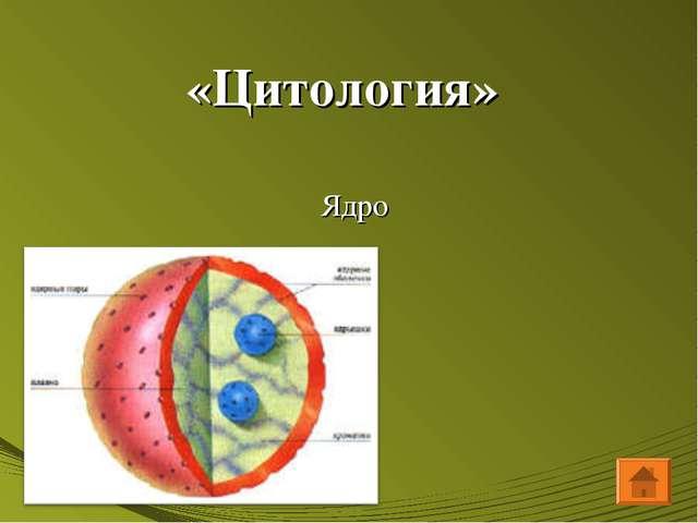 «Цитология» Ядро