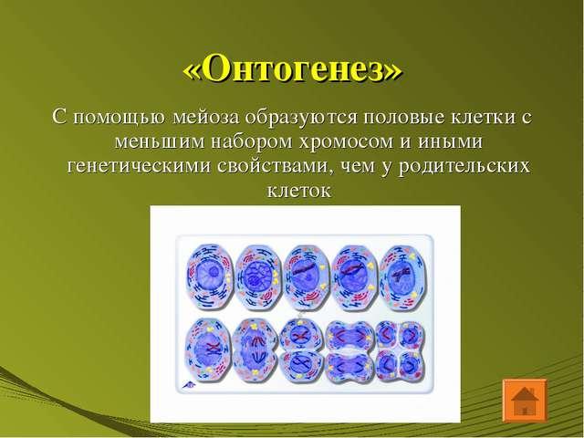 «Онтогенез» С помощью мейоза образуются половые клетки с меньшим набором хром...