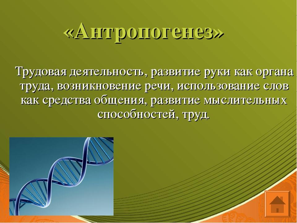 «Антропогенез» Трудовая деятельность, развитие руки как органа труда, возникн...
