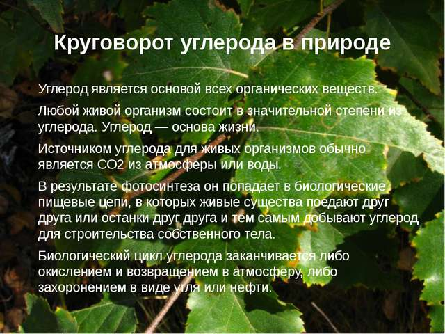 Круговорот углерода в природе Углерод является основой всех органических веще...
