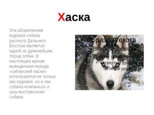 Хаска Эта аборигенная ездовая собака русского Дальнего Востока является одной
