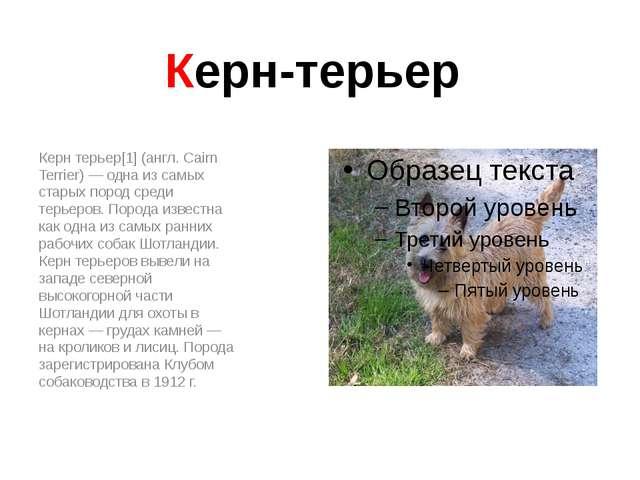 Керн-терьер Керн терьер[1] (англ. Cairn Terrier) — одна из самых старых пород...