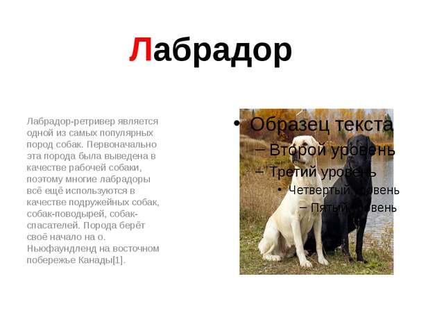Лабрадор Лабрадор-ретривер является одной из самых популярных пород собак. Пе...