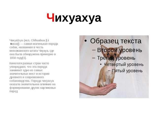 Чихуахуа Чихуа́хуа (исп. Chihuahua [tʃiˈwawa]) — самая маленькая порода собак...