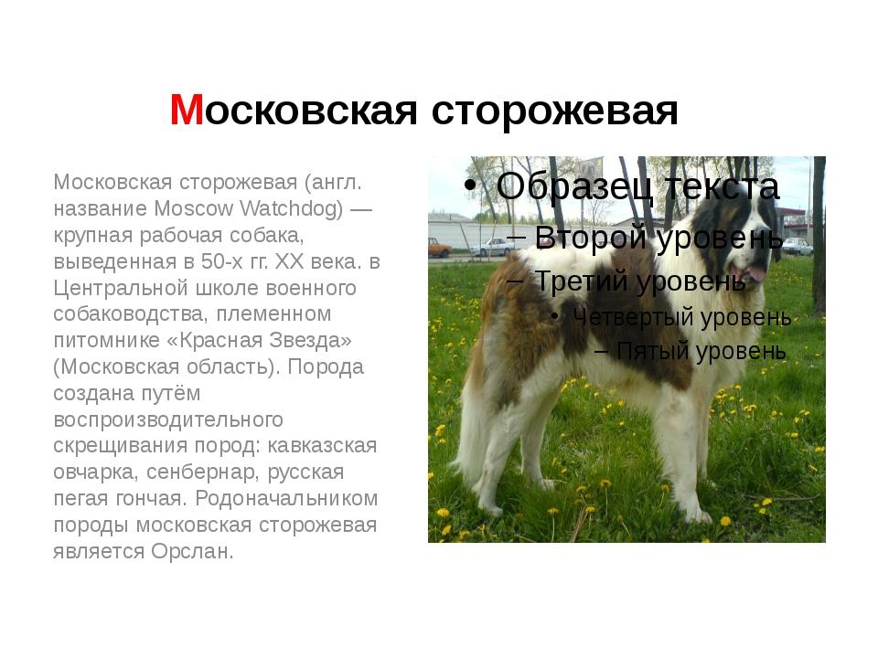 Московская сторожевая Московская сторожевая (англ. название Moscow Watchdog)...