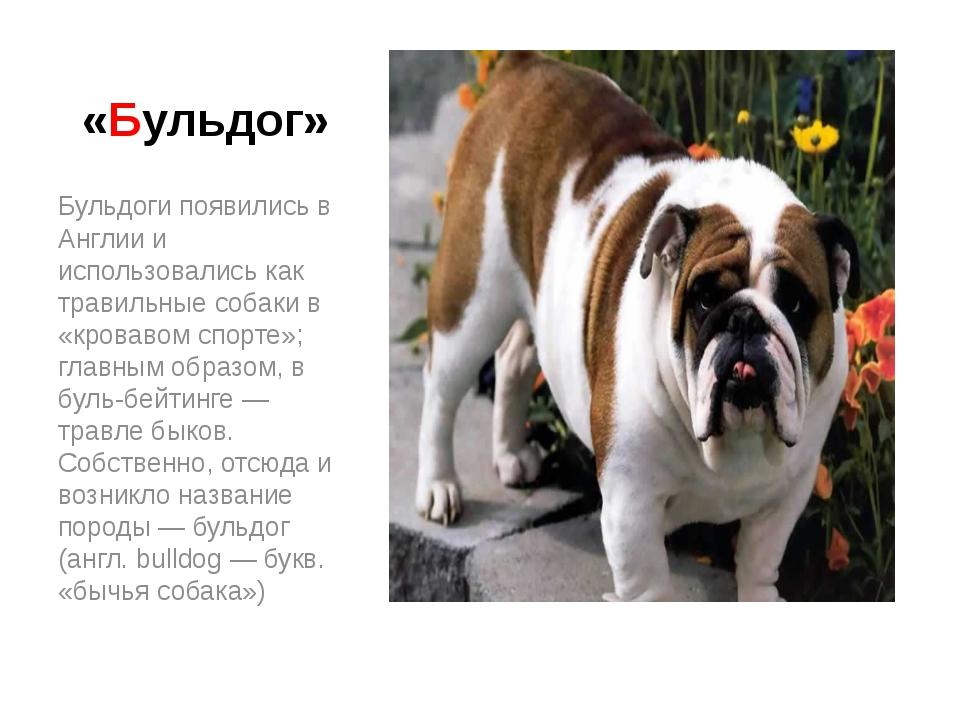 «Бульдог» Бульдоги появились в Англии и использовались как травильные собаки...
