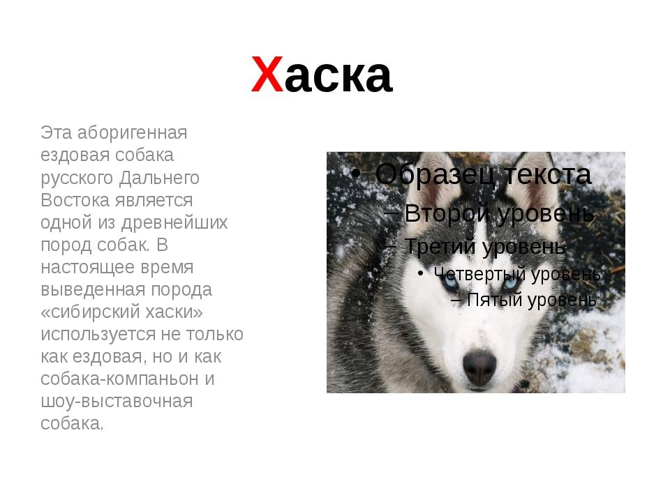 Хаска Эта аборигенная ездовая собака русского Дальнего Востока является одной...