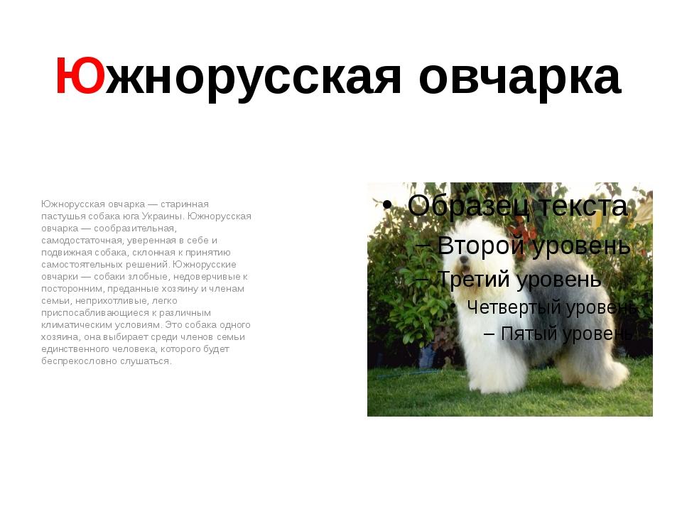Южнорусская овчарка Южнорусская овчарка — старинная пастушья собака юга Украи...