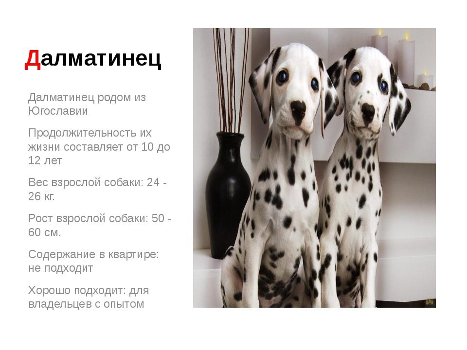 Далматинец Далматинец родом из Югославии Продолжительность их жизни составляе...