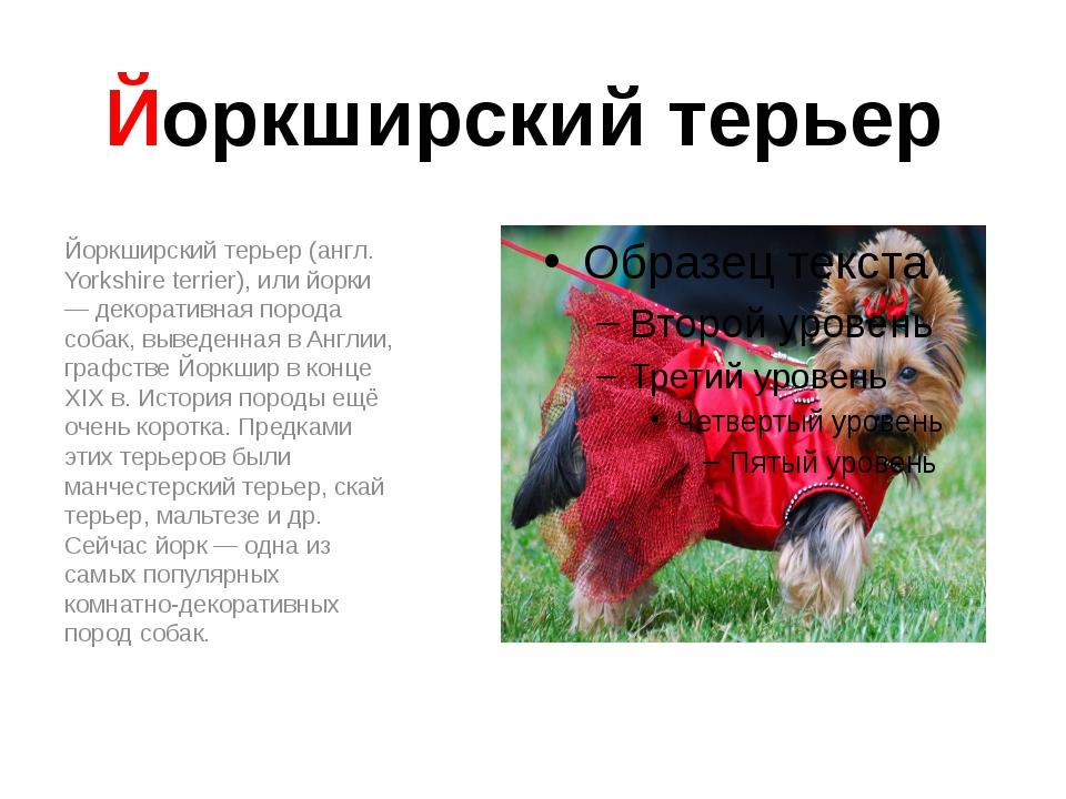 Йоркширский терьер Йоркширский терьер (англ. Yorkshire terrier), или йорки —...