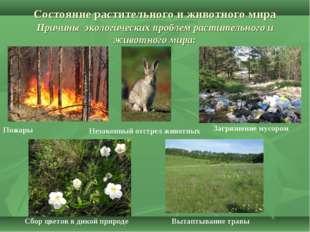 Состояние растительного и животного мира Причины экологических проблем расти