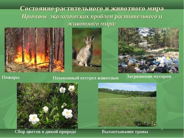 Состояние растительного и животного мира Причины экологических проблем расти...