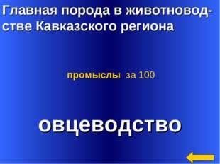Главная порода в животновод- стве Кавказского региона овцеводство промыслы за