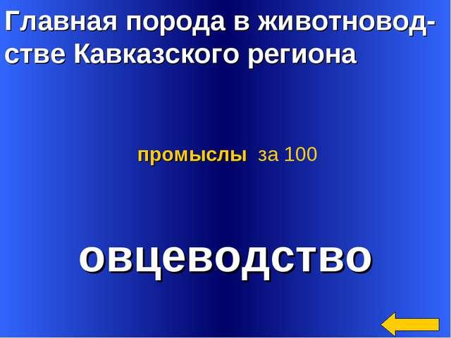 Главная порода в животновод- стве Кавказского региона овцеводство промыслы за...