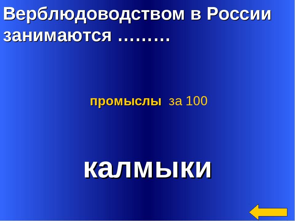 Верблюдоводством в России занимаются ……… калмыки промыслы за 100