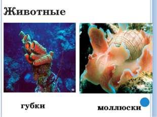 коралловые полипы медузы Кишечнополостные