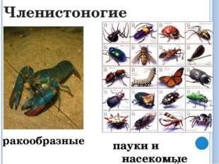 Хордовые рыбы земноводные