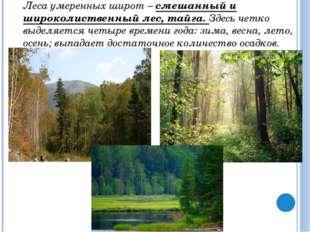 В широколиственных лесах увеличивается число копытных: олени, лоси, косули.