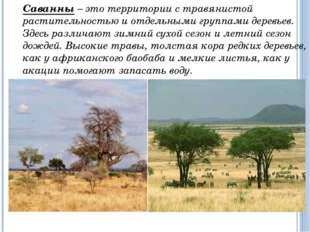 Дикие животные (антилопы, зебры) могут пробегать большие расстояния в поиска