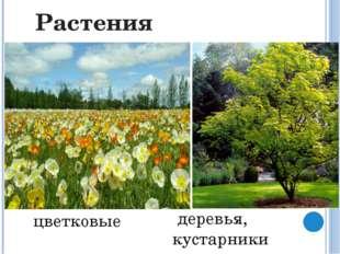 Грибы особое царство организмов, раньше они считались растениями