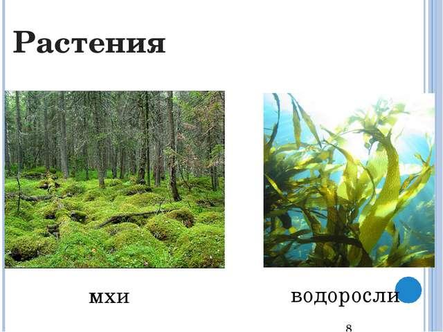 цветковые деревья, кустарники Растения