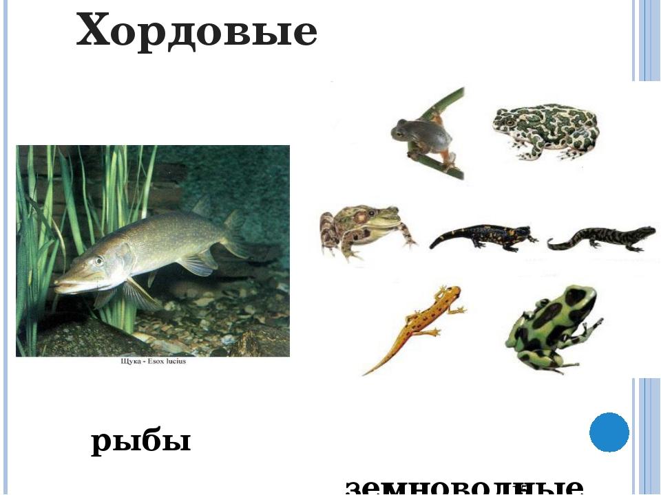 Пресмыкающиеся Черепаха Трионикс Габонская гадюка Крокодил Туатара (гаттерия)