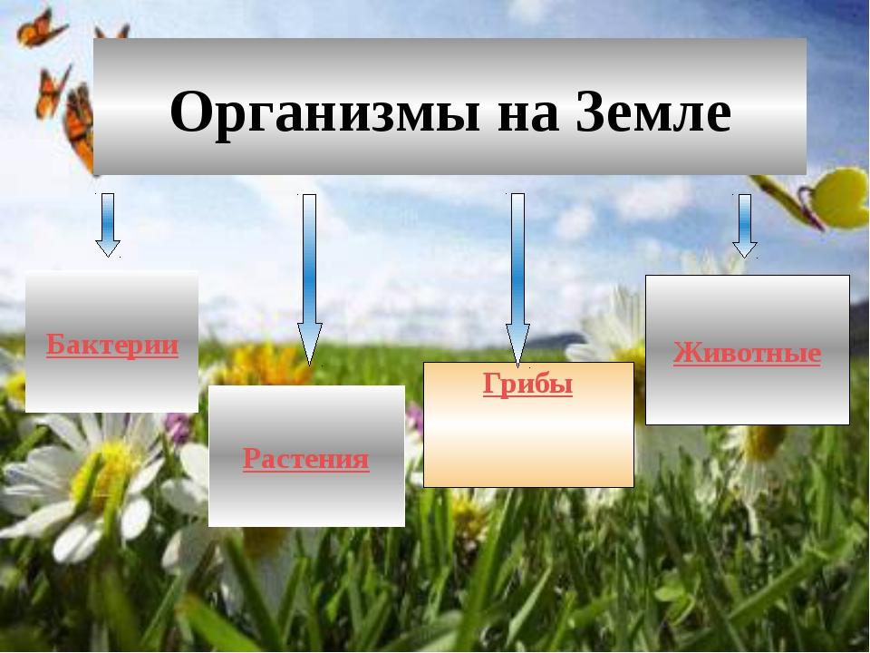 Биосфера. Разнообразие и распространение организмов на Земле. Природные зоны...