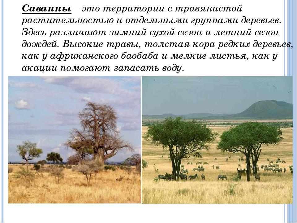Дикие животные (антилопы, зебры) могут пробегать большие расстояния в поиска...