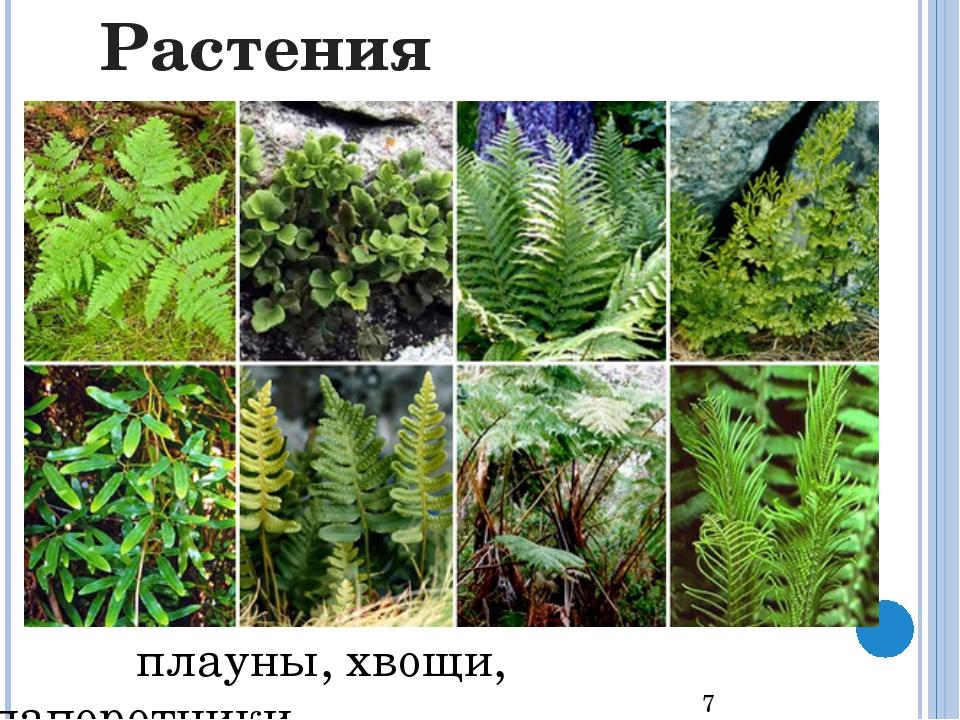 водоросли мхи Растения
