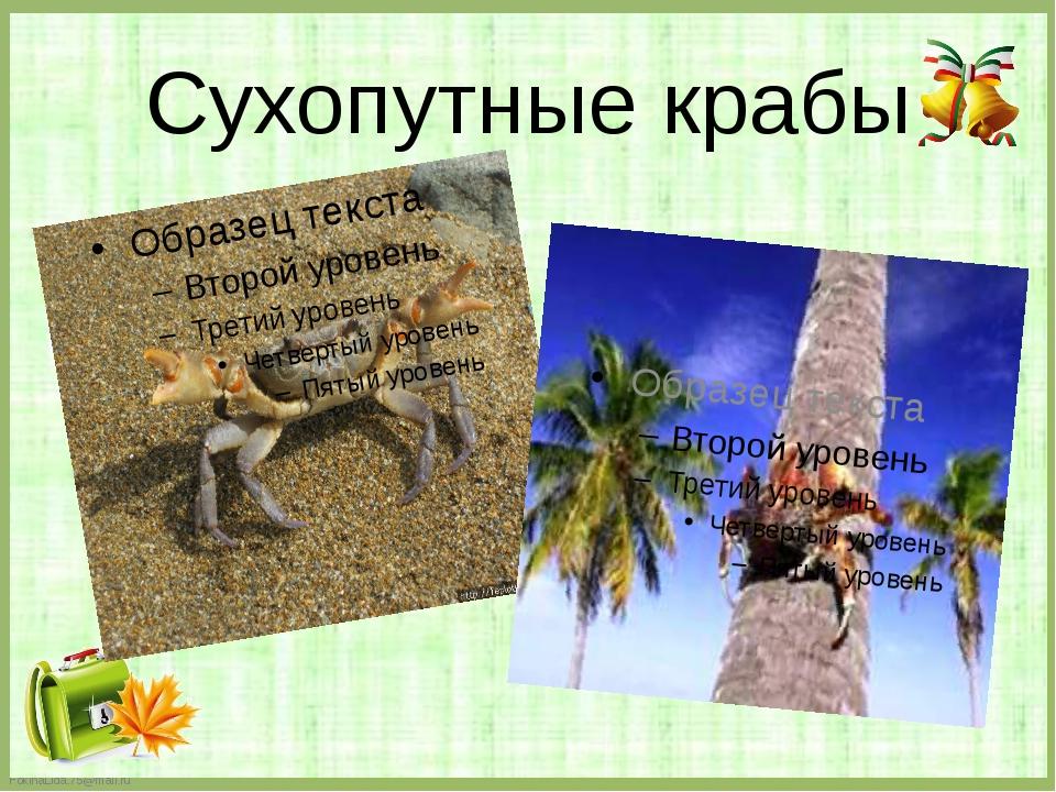 Сухопутные крабы FokinaLida.75@mail.ru