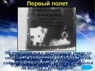Первый полет В первый экспериментальный полет отправили двух собак: Цыгана и
