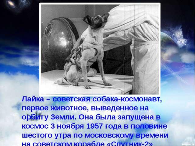 Лайка – советская собака-космонавт, первое животное, выведенное на орбиту Зем...