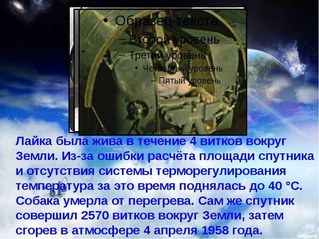 Лайка была жива в течение 4 витков вокруг Земли. Из-за ошибки расчёта площад...