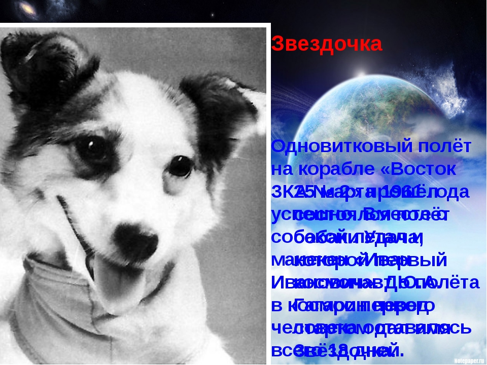 Одновитковый полёт на корабле «Восток ЗКА №2» прошёл успешно. Вместе с собак...