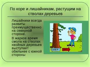 По коре и лишайникам, растущим на стволах деревьев Лишайники всегда развиты п