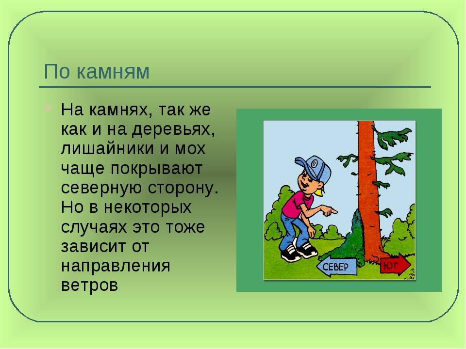 По камням На камнях, так же как и на деревьях, лишайники и мох чаще покрывают...