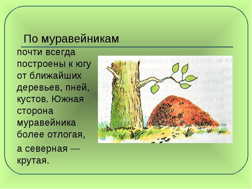 По муравейникам почти всегда построены к югу от ближайших деревьев, пней, ку...