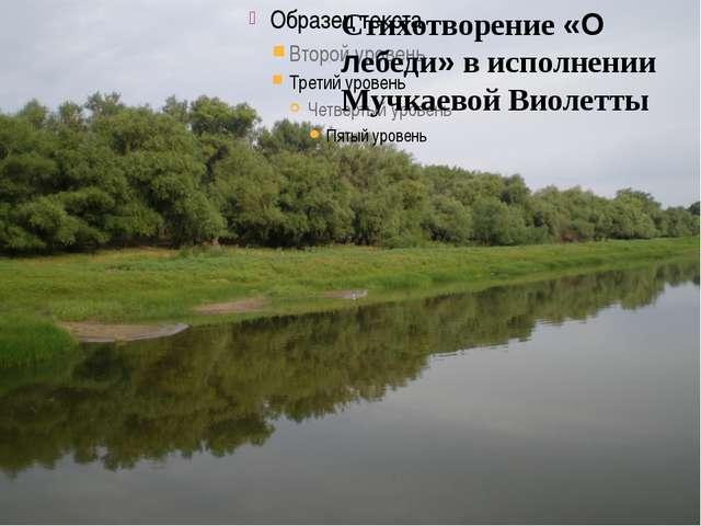 Стихотворение «О лебеди» в исполнении Мучкаевой Виолетты