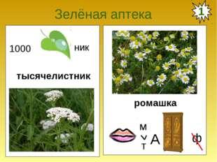 Зелёная аптека тысячелистник ромашка 1