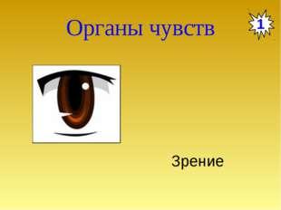Органы чувств 1 Зрение