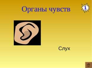 Органы чувств 1 Слух